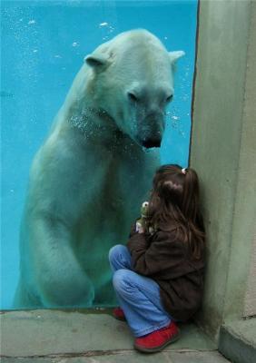 Страх перед мужчинами и образ медведя